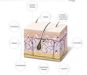 Skin Layers Overview